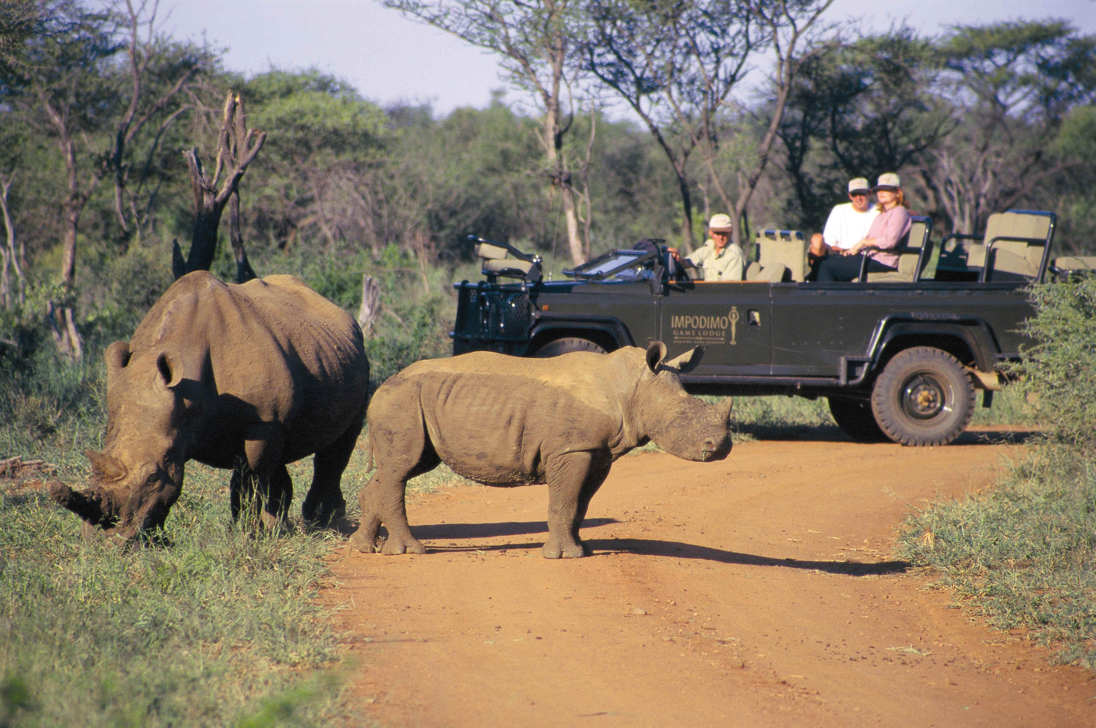 Safari Afrique : quelques jours dans la savane pour moi
