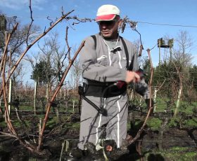 Comment tailler les vignes ?